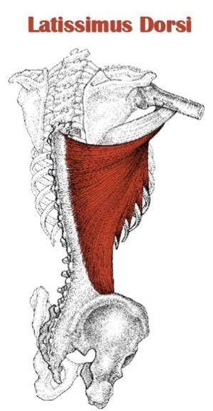 Latissimus Dorsi Soft Tissue Work: Help Shoulder Pain